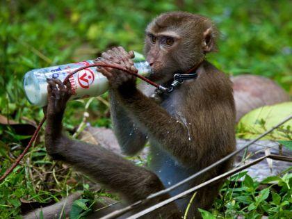 Лысаков не хочет быть потомком обезьяны, но это неизбежно? // Alexei Boitsov / Russian Look