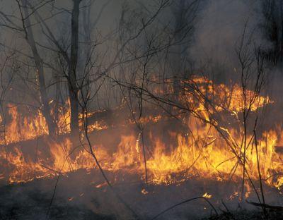 Лесные пожары в России сможет потушить только сама природа // Konstantin Mikhailov/Global Look Press