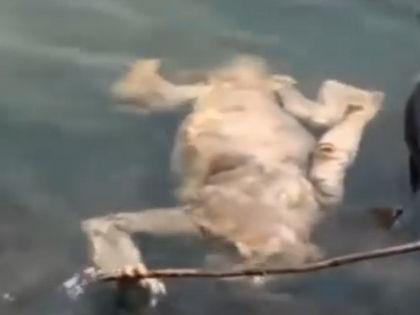 Тело странного животного в Кармен-дель-Паране // Кадр YouTube