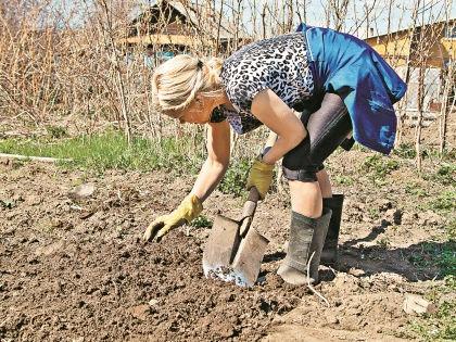 Подготовка почвы – залог отличного урожая // Shutterstock