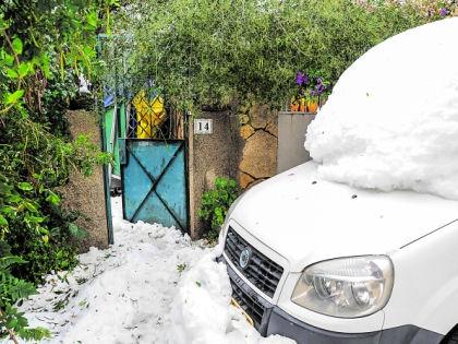 Снег и зелень // Shutterstock