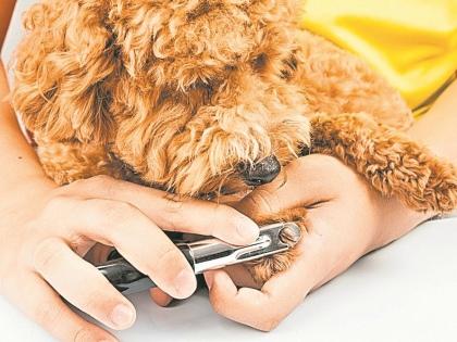 Уложите собаку на бок, зафиксируйте ее, погладьте. Как только она успокоится – приступайте // Shutterstock