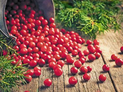 Во многих странах ее название связано с журавлем – от украинской «журавлины» до английского «кранберри» // Shutterstock