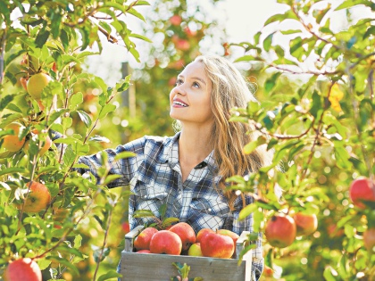 Если ваши яблони порадовали урожаем, собрав плоды, не забудьте позаботиться и о деревьях // Shutterstock