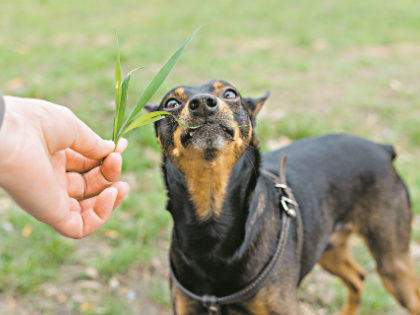 За животными на даче нужен глаз да глаз! // Shutterstock