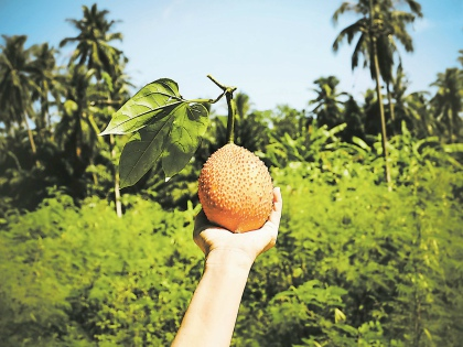 Сибирские ученые предлагают выращивать в России экзотические овощи из Африки и Азии // Shutterstock