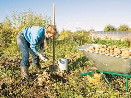 Осенью лучшего всего можно оценить состояние почвы // Shutterstock