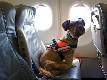Собака в самолете // Global Look