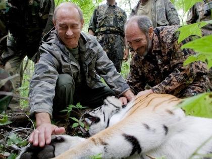 Тигр Кузя со своей приемной семьей // Kremlin.ru