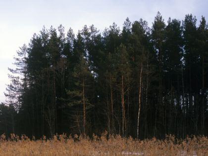 Причину смерти детей установят судмедэксперты // Иван Дементиевский / Russian Look