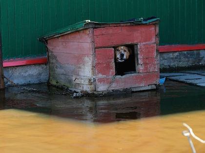 Все дома в Томской области затоплены приблизительно наполовину //  Замир Усманов / Russian Look