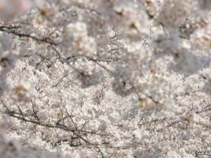Япония славится своими долгожителями по всему миру // Global Look Press
