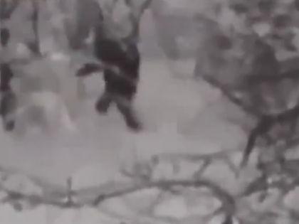 Очевидцы сделали гипсовые слепки следов легендарного существа // YouTube
