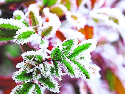 Заморозок // Shutterstock