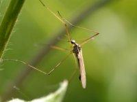 Как защититься от укусов комаров