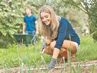 Как подготовить цветы для осенней высадки