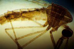 Перенесшие малярию в утробе матери дети имеют проблемы с памятью и обучением