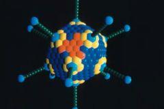 Новая модель протеинкиназы дает возможность создать мощные лекарства от рака