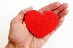 О размере сердца человека можно судить по размеру его кулака