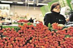С голландских аукционов каждый день продают почти 20 миллионов живых растений