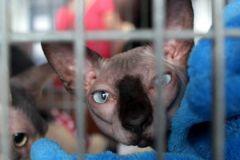 Кот стал жертвой разбирательств между ФСПП и злостным неплательщиком
