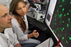 Сотни типов клеток постоянно обмениваются информацией между собой