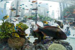 Наблюдение за аквариумом успокаивает психику и снижает давление