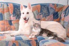 Кошки ускоряют заживление переломов у человека, а собаки умеют искать рак