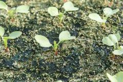 Чего только садоводы-любители не выращивают через рассаду