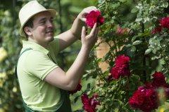 В цветниках начинается буйство красок, цветут и благоухают декоративные кустарники
