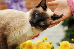 Кошка умеет произносить до 15 звуков