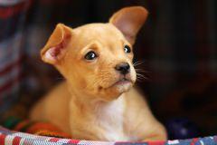 Собаки могут определить эмоции незнакомца