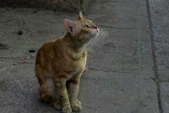 Кошка начала громко мяукать, чем и привлекла внимание жильцов