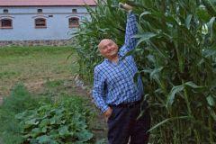 Кукуруза, выращенная предприятием Юрия Лужкова