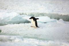 Депутаты Сидякин и Савченко вылетят из Антарктиды, когда улучшится погода