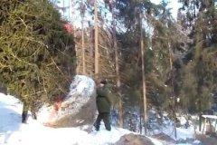 Чем меньше размер кома – тем выше вероятность того, что дерево не приживется, а если приживется, то будет долго болеть