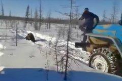 Случай в Якутске, где вахтовики устроили жестокую расправу над медведем, спровоцировал разговоры о необходимости ужесточения наказания за жесткое обращение с животными