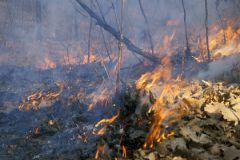 Пожарная обстановка в Забайкальском крае из-за порывов ветра может ухудшиться