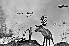 На войне фотограф искал жизнь