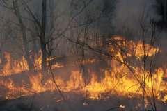 Лесные пожары в России сможет потушить только сама природа