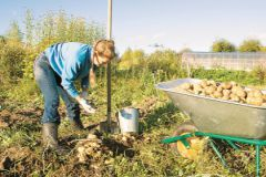 Осенью лучшего всего можно оценить состояние почвы