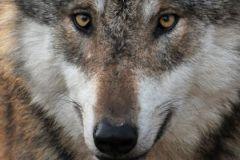 Молодые люди из Таджикистана ухаживали за дикими кабанами и волком в небольшом зоопарке
