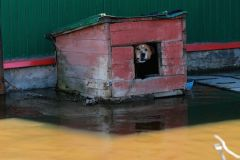 Все дома в Томской области затоплены приблизительно наполовину