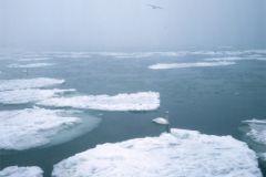 Зимний водоём