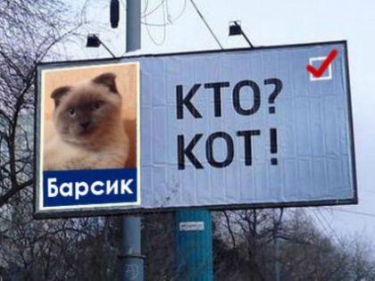 Такими темпами скоро появится целый избирательный список, состоящий из котов