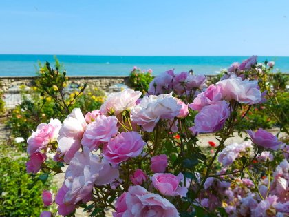 Роза – символ Болгарии