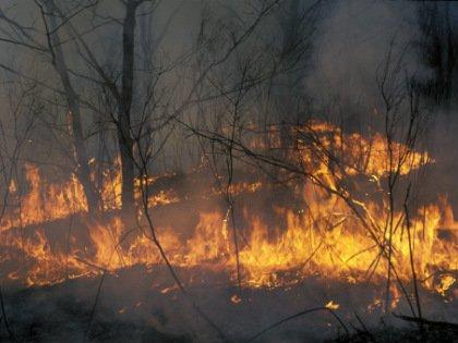 Самые первые пожары были зафиксированы еще 24 и 25 января