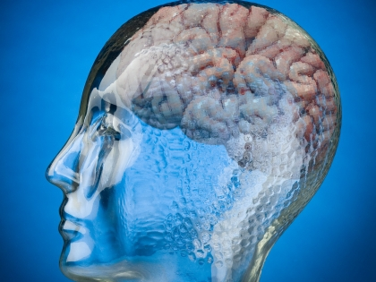Загадочные полушария человеческого мозга