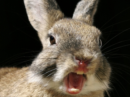Убийство кролика в эфире
