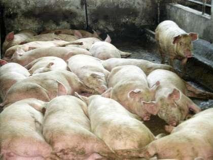 Надо кардинально менять структуру мясного животноводства, уверены в Национальной мясной ассоциации